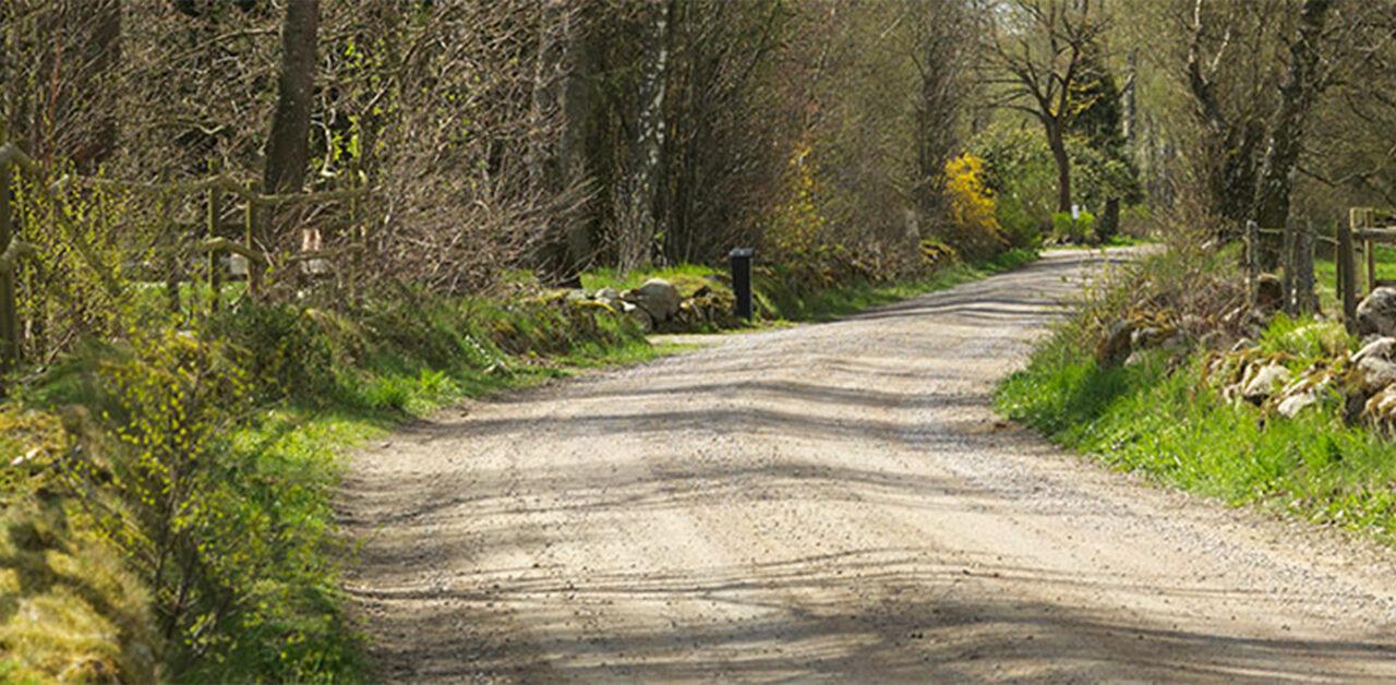 Slingrande skogsväg i somrigt skogslandskap