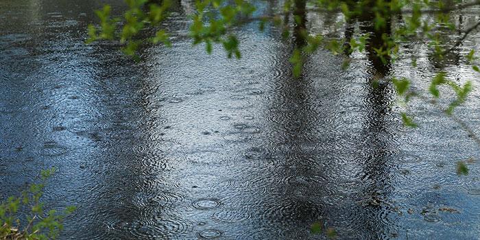 Regnet smattrar på vattenytan. I förgrunden syns en gren med gröna löv.