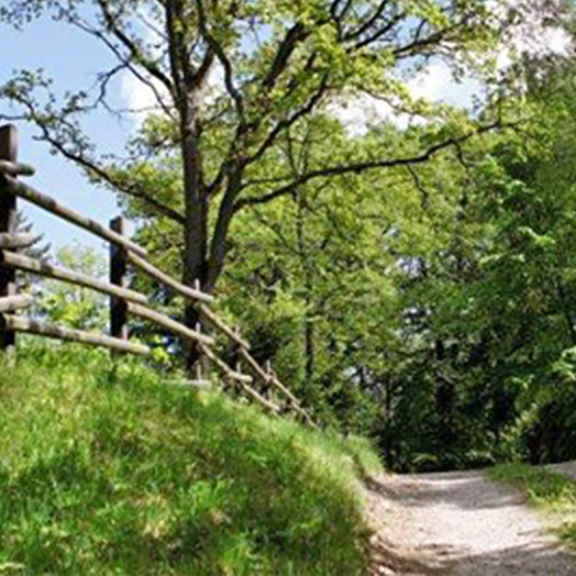 Ett äldre trästaket längs en grusväg i skogsmiljö